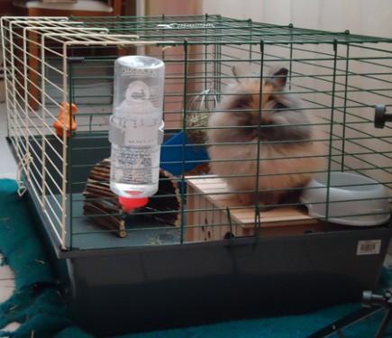Un lapin en libert la maison c est possible for Avoir un lapin a la maison