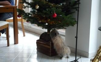 Pitchoune et le sapin de Noël