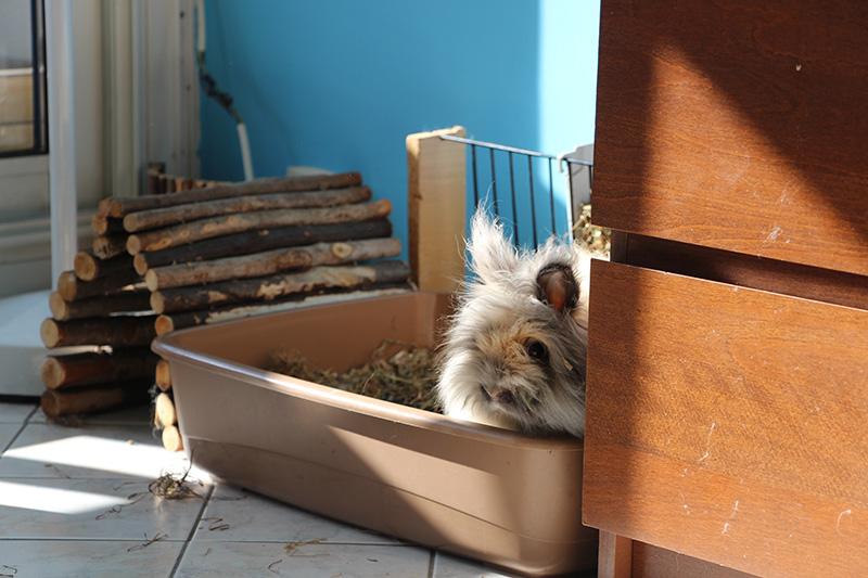 Pitchoune dans son bac à litière