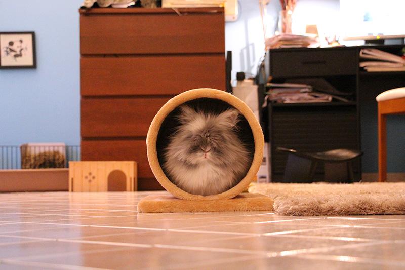 Gribouille dans ton tunnel pour lapin