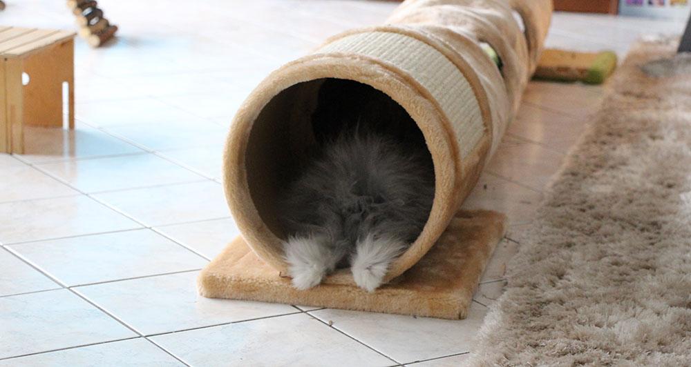 Gribouille, mon lapin dans son tunnel