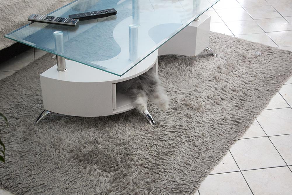 Mon lapin, Gribouille qui dépasse de la table basse