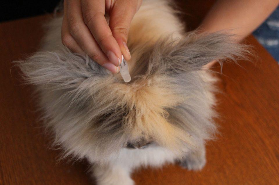 Mon lapin a des puces : que dois je faire ?