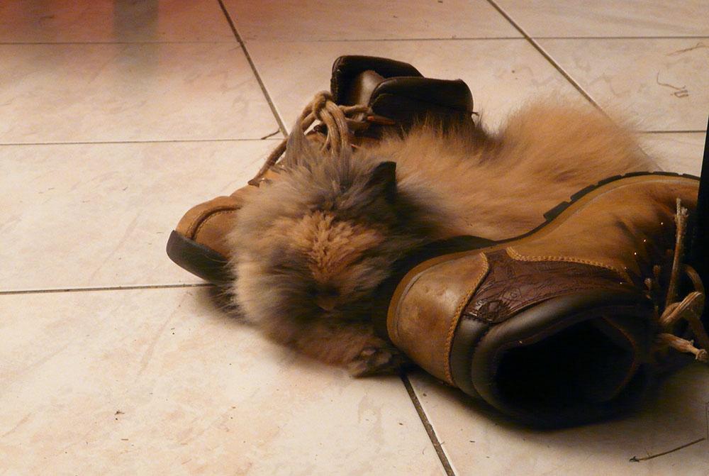 Pitchoune bébé au milieu des chaussures