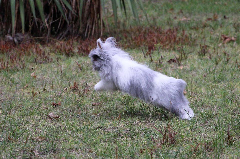 [vidéo tuto] Comment sortir son lapin dehors sans laisse ?