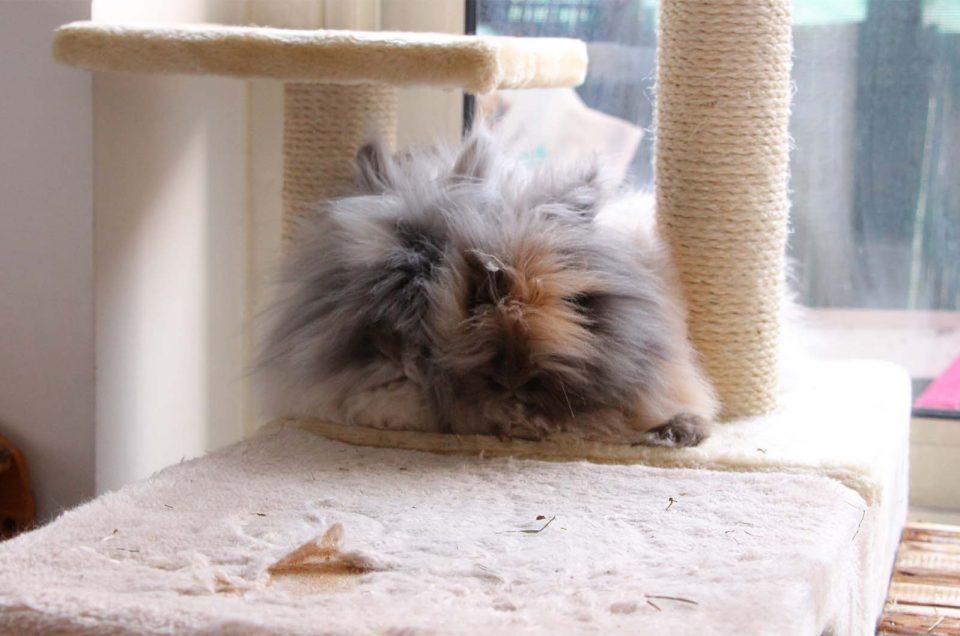 [Vidéo] Comment faire cohabiter ses lapins ?