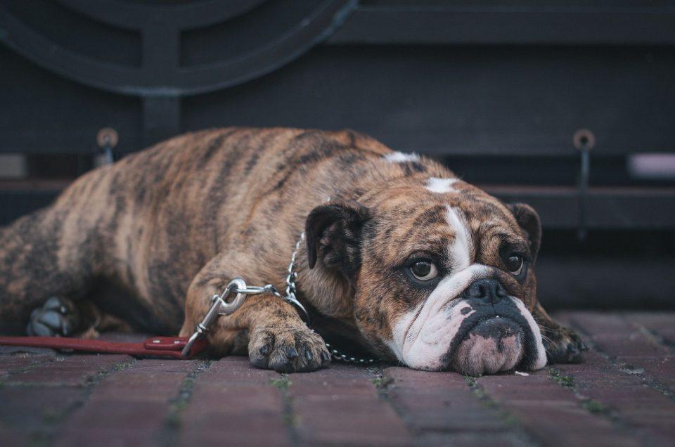 Témoin de maltraitance animale : que faire ? Qui contacter ?