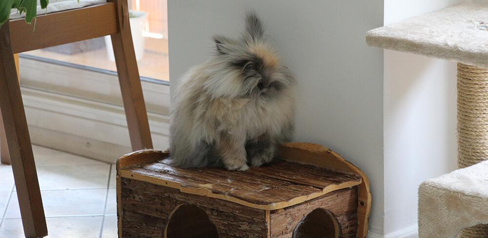 Lapin a la maison avie home for Abreuvoir lapin fait maison